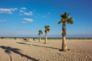 Palmy na pláži