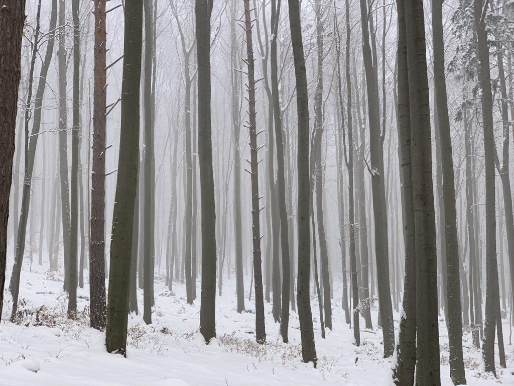 Lesy nad Bojnicami, smer Šútovce