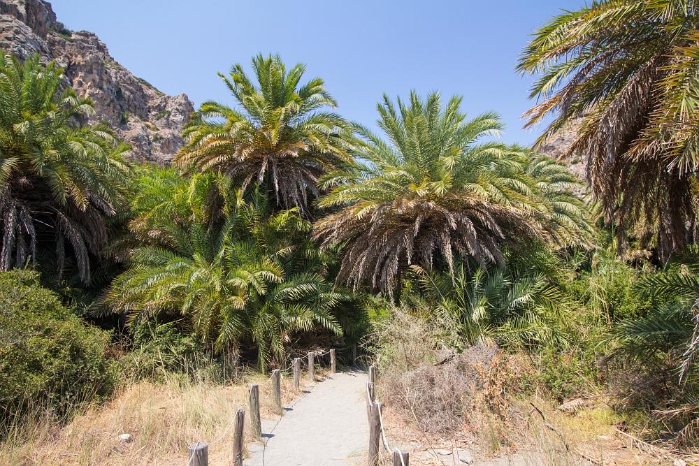 Vstup do palmového pralesa obklopujúceho rieku.