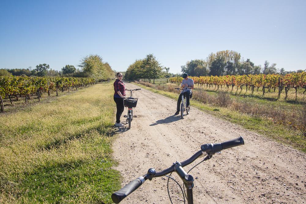 Bicykle a vinice