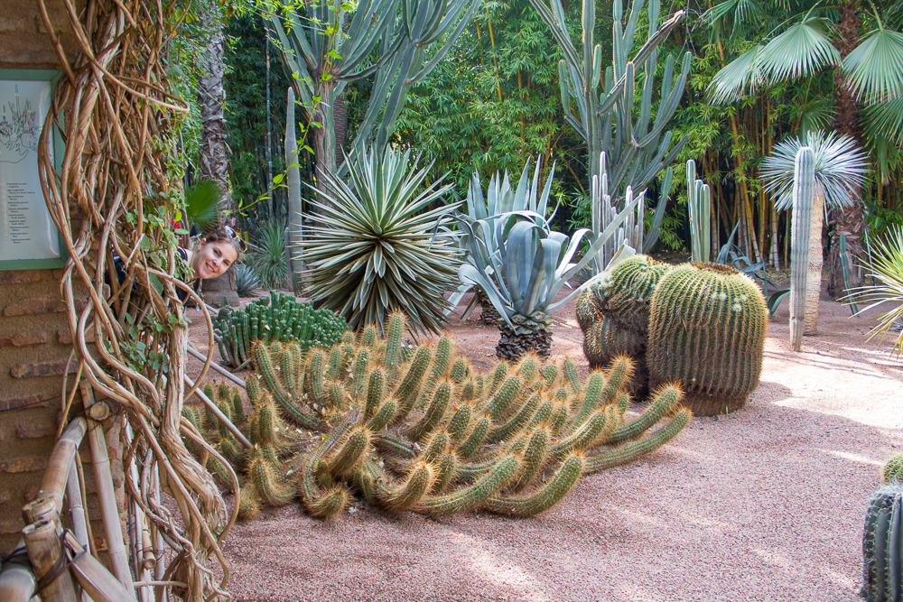 Kaktusy v botanickej záhrade Majorelle